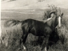 Grace's Mom with Rickey as a yearling