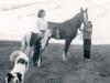 Part walker foal by Rickey